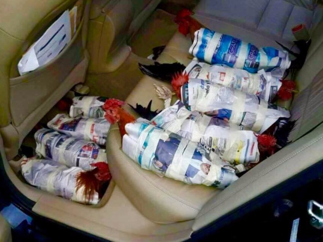 This photo of chickens evacuating from Hurricane Irma in the back of a car was shared nearly 50,000 times.