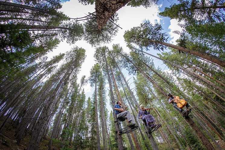 Is it a bird? Is it a plane? No—it's Tree-o, performing in the treetops at the Breckenridge International Festival of the Arts.